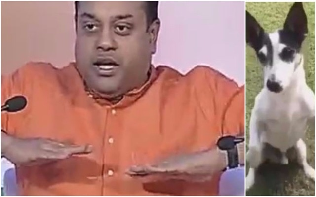 WATCH: When BJP's Sambit Patra makes fun of Rahul Gandhi's dog Pidi