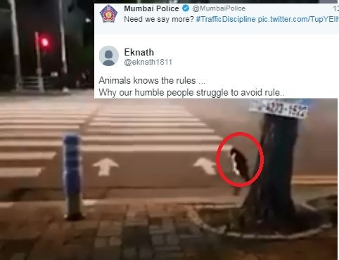 Mumbai police tweeted cat's video to make people aware of traffic rules