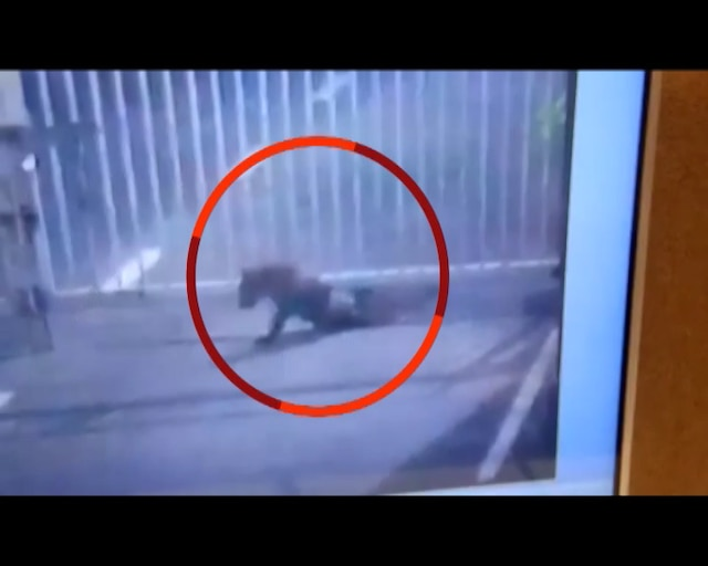 SHOCKING: Leopard inside Gujarat assembly campus, search operation underway