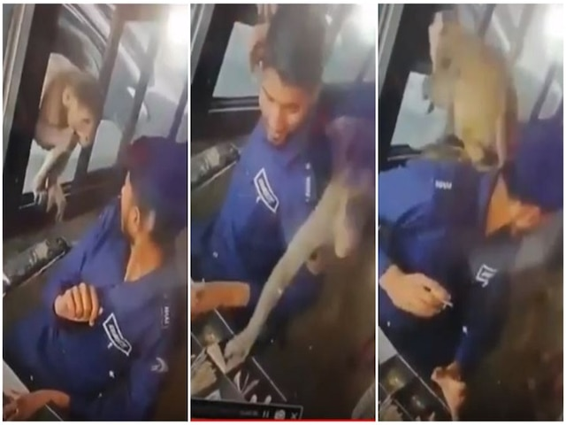 WATCH VIDEO- At toll booth in Kanpur, monkey allegedly arrives in car to steal Rs 5,000