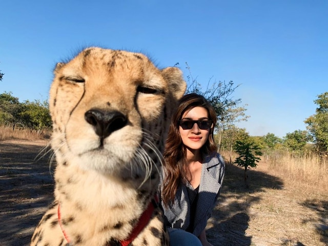 Kriti Sanon Poses With Cheetah In Zambia, Gets TROLLED For her Selfie