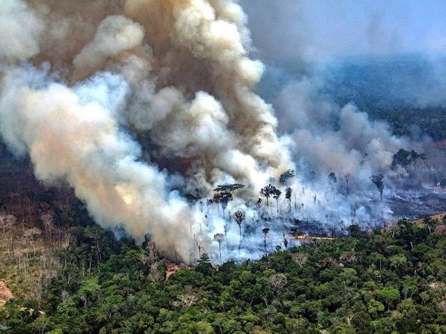 Why Is Part Of The Amazon Burning? Here Is All You Need To Know