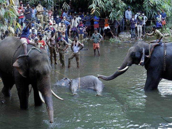 Kerala Elephant May Have Accidentally Consumed Cracker-Filled Fruit, Says Environment Ministry