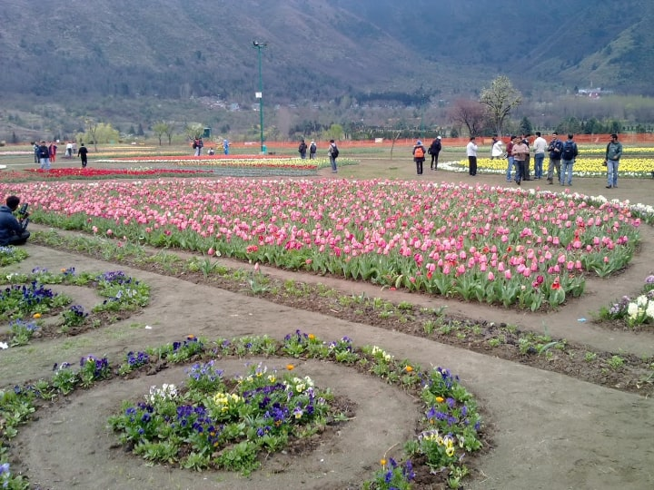 Tulip Garden to open soon for tourists, more than 18 lakh flowers ready to be wooed, see photos