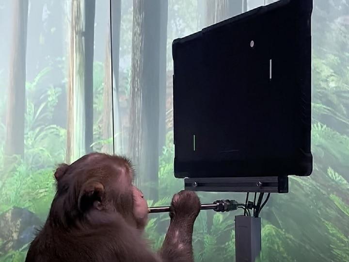 Elon Musk की कंपनी ने किया कारनामा, अपने दिमाग से वीडियो गेम खेल रहा बंदर, देखें वीडियो