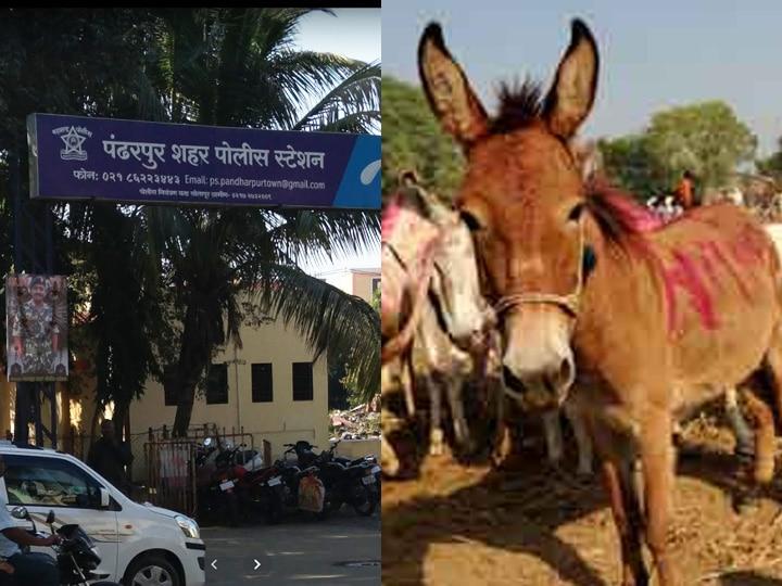 Pandharpur Sand Mafia action Taken By Police donkey donkey went to Ooty